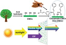 Cinnamate‐Functionalized Cellulose Nanocrystals as UV‐Shielding Nanofillers in Sunscreen and Transparent Polymer Films