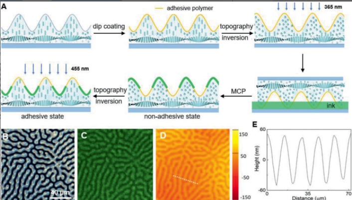 Photoswitching between water-tolerant adhesion and swift release by inverting liquid crystal fingerprint topography